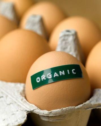 organic_eggs11