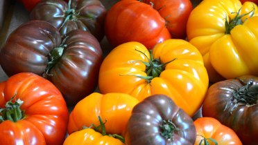 heirloomtomatoes-sharonotai